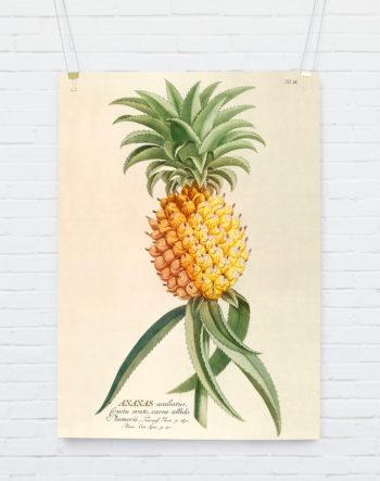 ananas_hangingposter