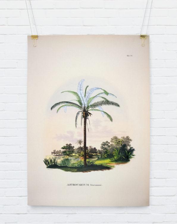 Astrocaryum Murumurú. Botanical Palm Print