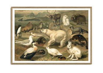 Arctic Fauna Horizontal Print