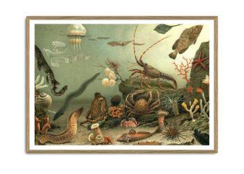 Aquarium Horizontal Print
