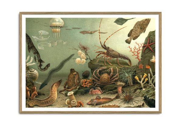 Aquarium Horizontal Print  No. 2913H