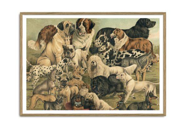 Dogs Horizontal Print II 50x70cm