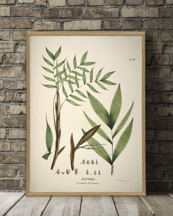 Botanical Bactris Plant Print