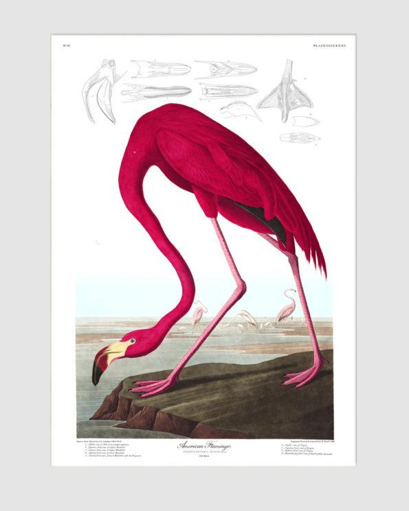 American Flamingo Print
