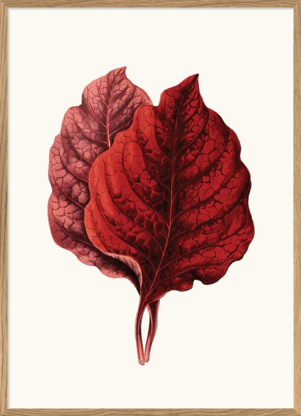 Red Leaves Print II 50x70cm