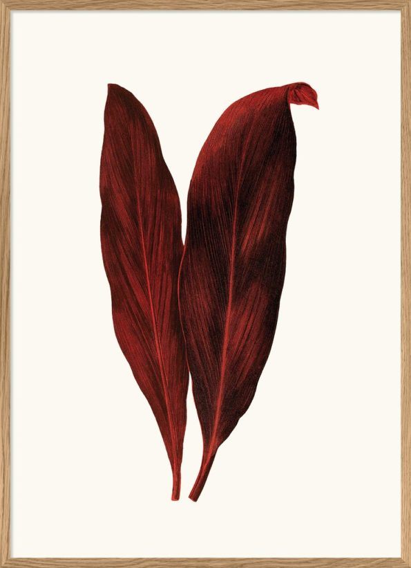 Red Leaves Print 50x70cm