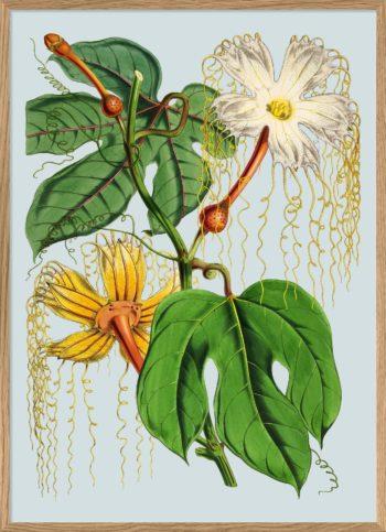 Print Plants